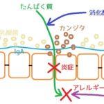 腸脳相関の話