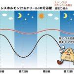 副腎疲労度と甲状腺機能の関係