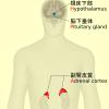 副腎疲労のサプリメント治療